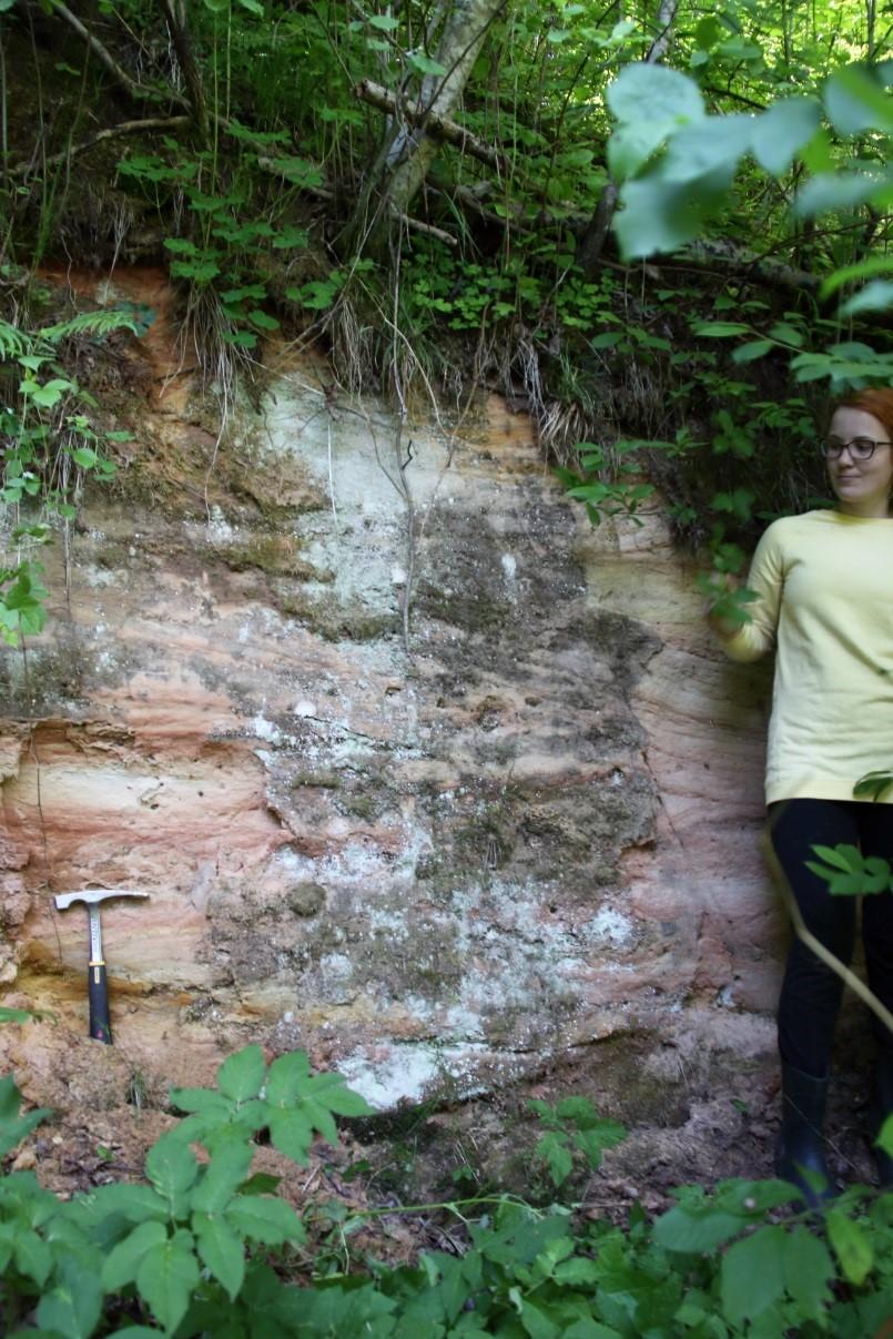 Essi müüris paljanduvad punakas-kollased põimkihilise liivakivi kihid (foto: T. Meidla, 2017).