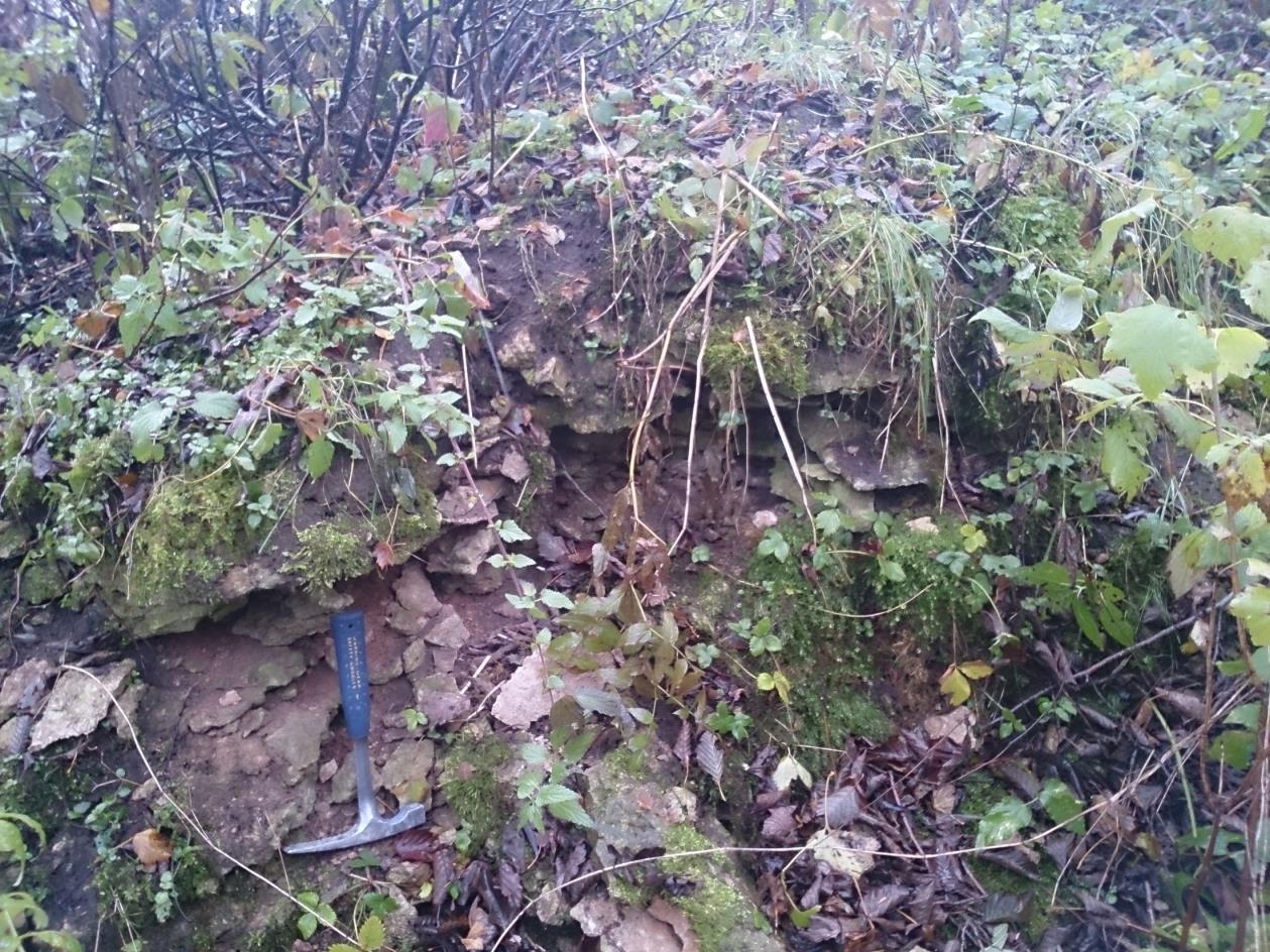 Idavere kunagises paemurrus paljanduv üksik läbilõige (foto: T. Meidla, 2014).