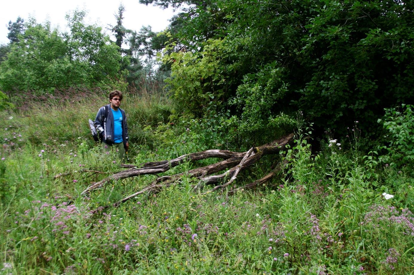 Nõmmeküla paemurru edelanurga läänekülg, kus paljanduvad kamardunud lubjakivitükid (foto: T. Ani, 2012).