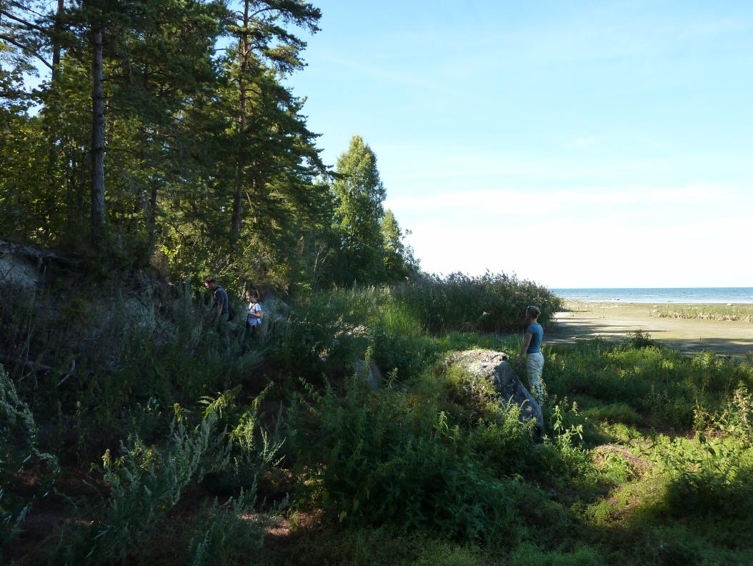 Paramaja panga ees paiknev taimestik ja peal kasvav hõre mets (foto: T. Paiste, 2015).