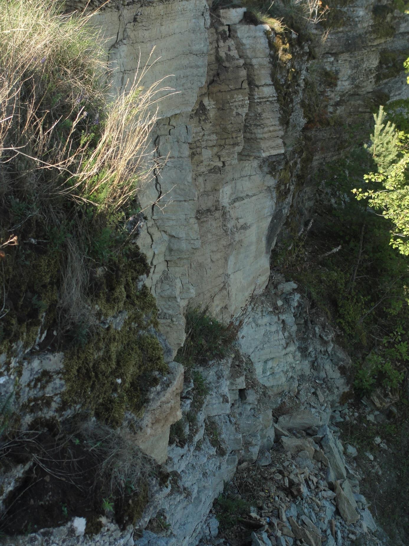 Rannamõisa pank. Karbonaatne läbilõige, pildistatud matkarajalt, astangu servalt ida suunas (foto: T. Ani, 2013).