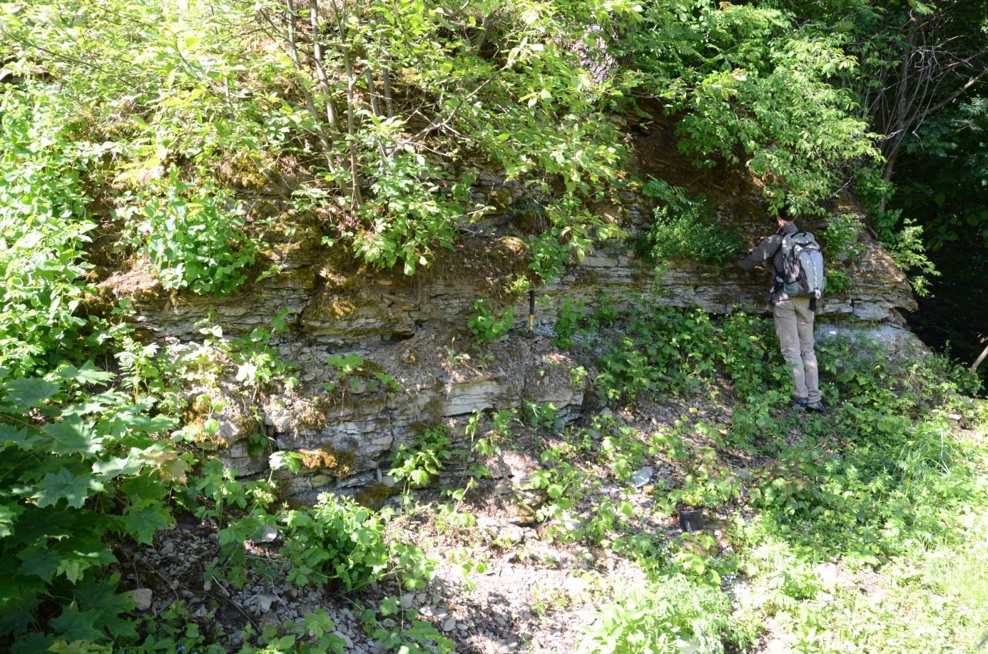 Saku paemurru aiaga piirneva paljandi osa (foto: T. Meidla, 2012).