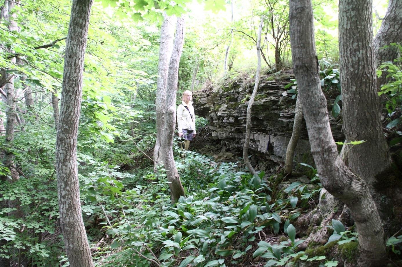 Suurupi paljand (foto: T. Meidla, 2012).