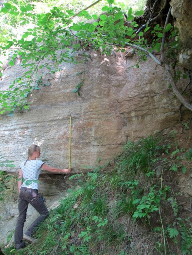 Valgejõe paljandis paljanduv Valgejõe kihistik (pildil inimese käest alates kõrgemale) (foto: T. Paiste, 2013).