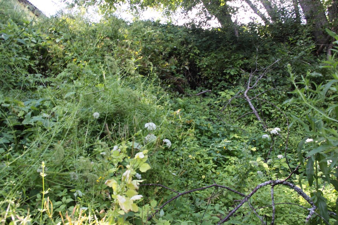 Varangu stratotüüpse paljandi asukoht Selja jõe võsastunud vasakul kaldal (foto: T. Meidla, 2014).