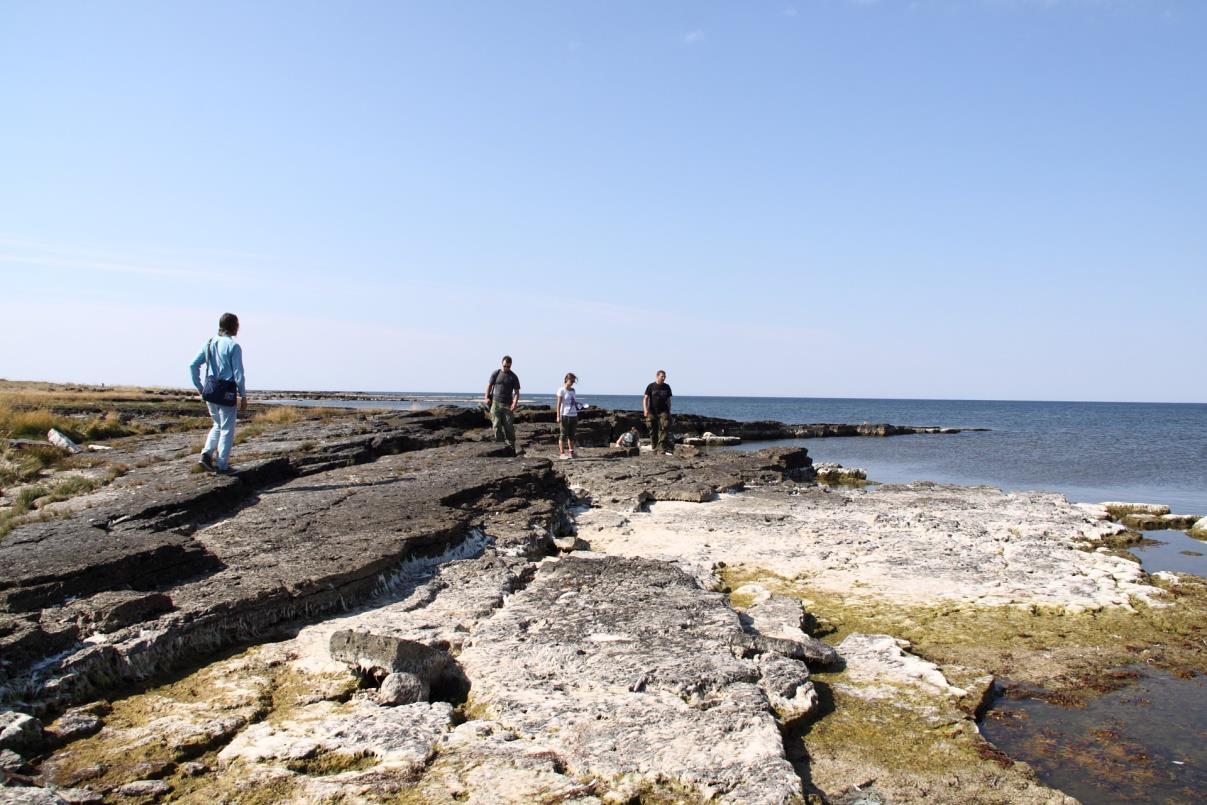 Vilsandi saare biohermid, mille vahel esineb kiht kavernoosset dolomiiti (foto: S. Soomer, 2015).