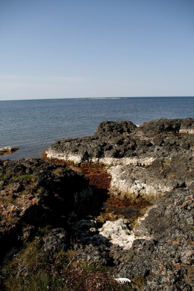 Vilsandi saarel paljanduv bioherm (foto: S. Soomer, 2015).
