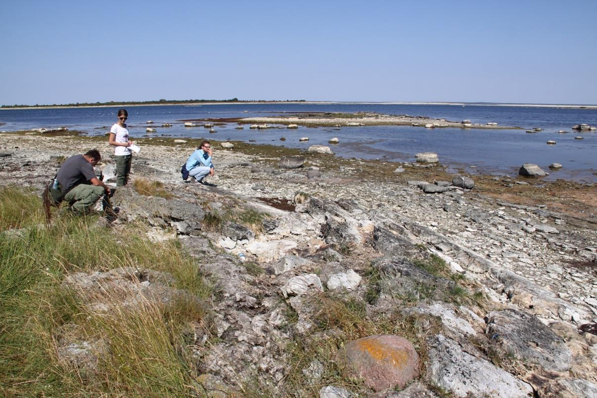 Vilsandi saarel paljanduvad kallutatud kihid (foto: S. Soomer, 2015).